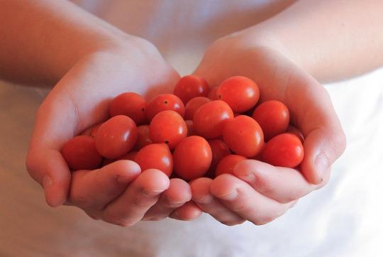 غذای ارگانیک چیست؟
