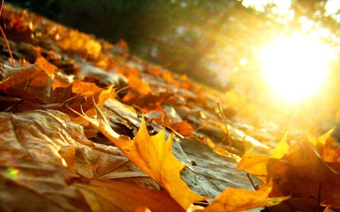 نور آفتاب باعث افزایش
