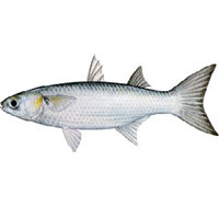 امگا 3 ماهی را با این طبخ حفظ کنید