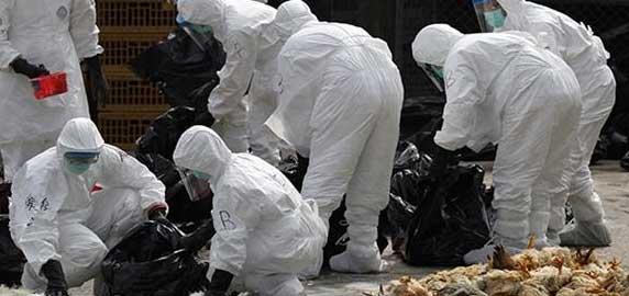 رعایت نکات ایمنی برای پیشگیری از ابتلا به آنفلوآنزای مرغی