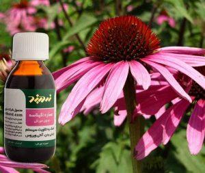قویترین آنتی بیوتیک های گیاهی