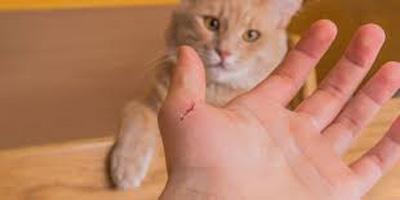 بیماری مشترک گربه و انسان