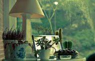 چه گیاهانی برای دور کردن حشرات از خانه مفید هستند؟