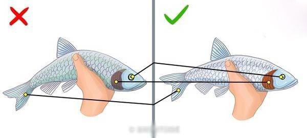 تشخیص ماهی تازه و سالم