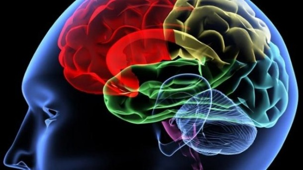 افراد باهوش مغز سالم تری دارند