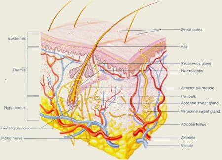 رژیم غذایی غنی از سیلسیوم,کلسیم و آهن ریزش مو را کاهش میدهد